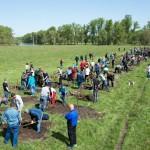 На въезде в Республику Алтай заложили аллею из 200 саженцев сосны, ели, дуба и рябины