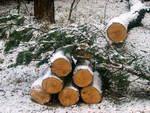 Житель Алтайского края незаконно заготовил лиственницу в Усть-Канском районе