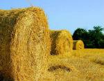 На Алтае уже заготовлено около 30 тыс. тонн сена