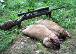 На Алтае из-за чумы на год запретили охоту на сурка