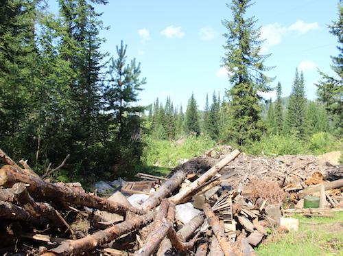 Экологов возмутила «хищническая вырубка» леса в Турочакском районе