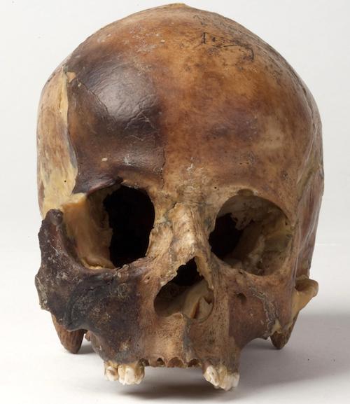 Исходный материал - череп девушки, погребенной на плато Укок