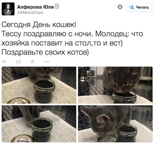 Из-за кота с икрой - на комиссию по этике
