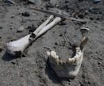 Могильник «Майма VII» подвергся разрушению