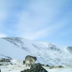Сразу несколько снежных барсов попались в фотоловушки