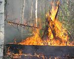 Площадь лесных пожаров превысила 185 га