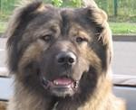 Породистого щенка арестовали за долги хозяина
