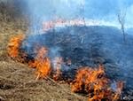 Травяные пожары потушены около нескольких сел