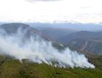 Ситуацию с лесными пожарами обсудили в правительстве