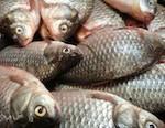 Власти разрешили платную рыбалку в Еланде