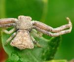 Выставка пауков открывается в музее Горно-Алтайска