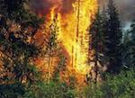 В Улаганском районе горит 85 гектаров леса