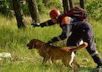 Пропавшего в Горном Алтае туриста из Омска ищут 14 спасателей и пять собак