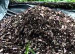 Браконьеры выкопали в Катунском заповеднике 600 кг золотого корня