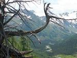 За проникновение в Катунский заповедник без пропусков туристов ждут штрафы