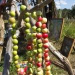 В Яйлю отпраздновали Яблочный спас