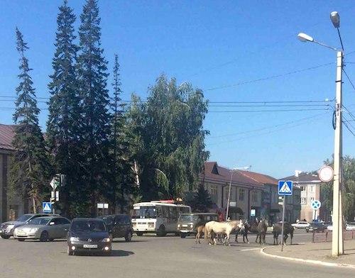 Лошади на Ткацкой. Фото: vk.com