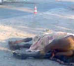 Водитель автомобиля погиб из-за выбежавшей на дорогу лошади