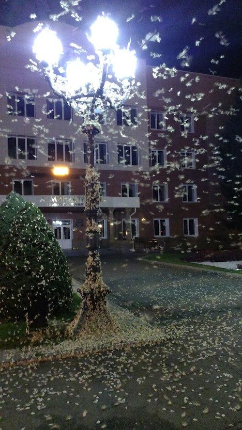 Ночные бабочки у мэрии города. Фото: Подслушано Горно-Алтайск (vk.com)