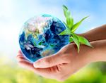 Республика Алтай заняла второе место в экологическом рейтинге «Зеленого патруля»