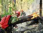 117 млн рублей выделено из федерального бюджета для тушения лесных пожаров на Алтае