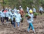 В Турочакском районе высадили 6,2 тыс. кедров