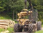 В Совете Федерации обсудили проблемы лесного хозяйства