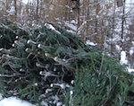 «Черные лесорубы» продолжают уничтожать лес