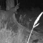Медведи и лоси попали в фотоловушки в Катунском заповеднике