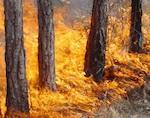 Пешие и воздушные патрули будут следить за пожарной ситуацией в лесах республики