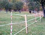 Электроизгороди будут отпугивать медведей от кордонов
