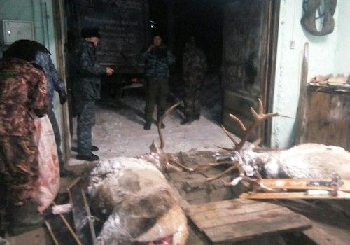 «Непростых» браконьеров задержали в Усть-Коксинском районе