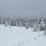 Обильные снегопады угрожают популяции козерога