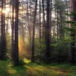 Новую особо охраняемую территорию создали в Аскатской долине
