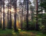 Сосновый бор в Аскате получит статус особо охраняемой природной территории