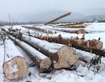 Прокуратура проверила законность лесозаготовок у священной горы Урчин