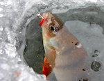 В Подгорном пройдут соревнования по ловле рыбы на мормышку
