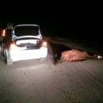 Лошадь спровоцировала автоаварию около Маймы