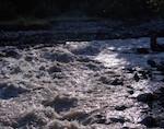 Два брата, ушедшие за черемшой, утонули в реке