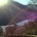 Маралуха в лучах солнца