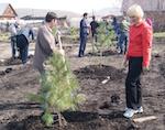 Кедровую аллею заложили в Горно-Алтайске