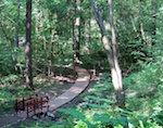 «Тропу здоровья» откроют на Комсомолке в Горно-Алтайске