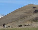 Еще один трансграничный резерват создадут в Горном Алтае