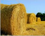 На Алтае продолжает заготовка кормов