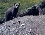 Объявлен конкурс на имя для сайлюгемского медвежонка