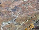 Уникальные петроглифы обнаружили в Кош-Агачском районе