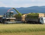 Заготовка кормов завершается в Горном Алтае