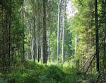 Потерявшихся сборщиков орехов нашли в лесу полицейские