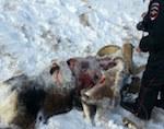 Дело о незаконной охоте на архара передали в суд