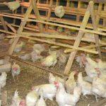 В колонии строгого режима открылась птицеферма